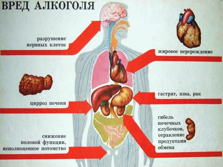 Вред алкоголя на сосудистую систему человека